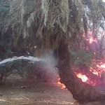 Tchad: encore un incendie d'origine inconnue ravage plus de 1 000 palmiers dattiers à Faya-Largeau