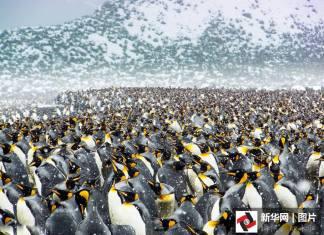 เยอะจนอึ้ง! เพนกวินหลายแสนตัวยืนรับลมหนาวในแอนตาร์กติกา