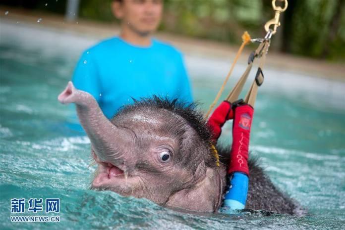 ชาวพัทยาช่วยลูกช้างตัวน้อยด้วยวิธีธาราบำบัด