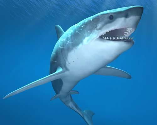 นักวิทย์ฯพัฒนายาจากเลือดฉลาม เตรียมทดสอบครั้งแรกกับมนุษย์