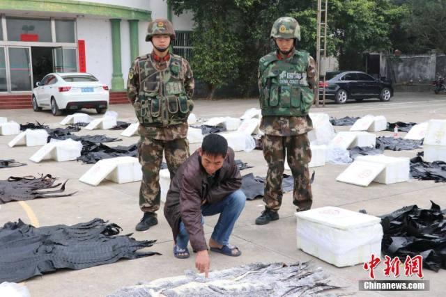 ทหารกว่างซีช็อค!ตรวจพบหนังจระเข้ราคาแพงนับพันแผ่น