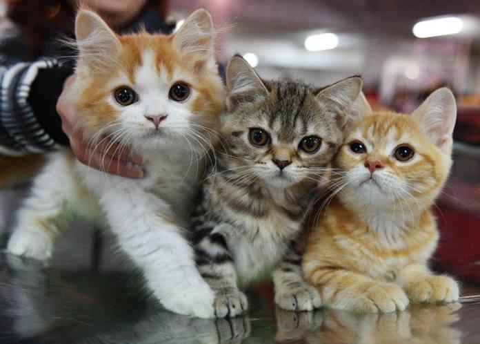 อินเดียประณาม! ตำราโหดสอนเด็ก ป.4 ฆ่าแมว