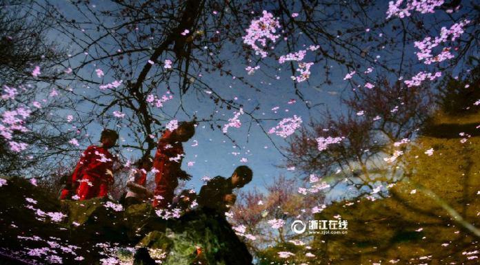 อีกแค่อึดใจ ! เทศกาลชมดอกเหมยบาน ณ หางโจว กำลังมาเยือน