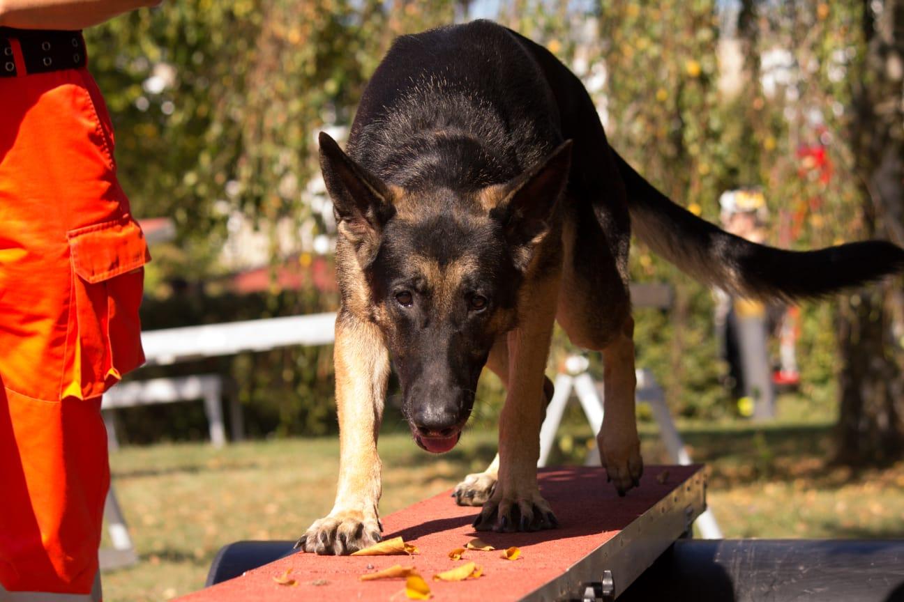 Hundeausbildung: Gerätearbeit