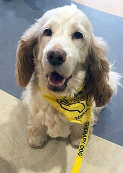 Therapy Dogs Nationwide