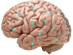 Neuromythes