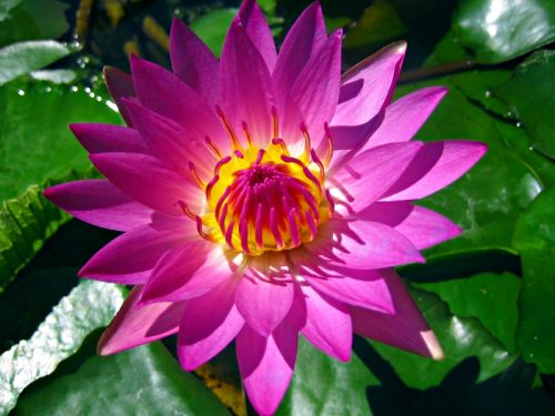 https://i2.wp.com/www.teachenglishinasia.net/files/u2/beijing_water_lily_purple.jpg