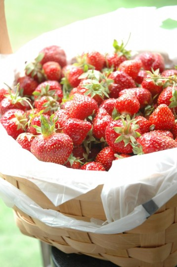 Step 1: Pick/Buy fresh delicious Strawberries
