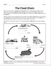 Food Chain Diagram Printable 3rd 5th Grade Teachervision