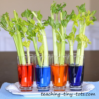 Image result for science water plant experiment