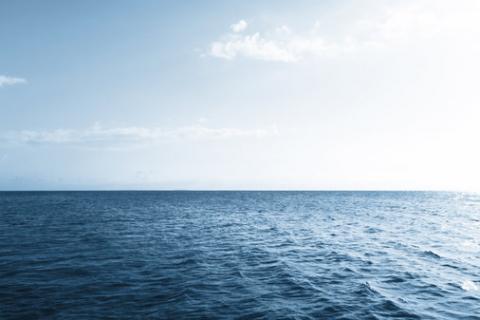 My Sea Creature TeachingEnglish British Council BBC