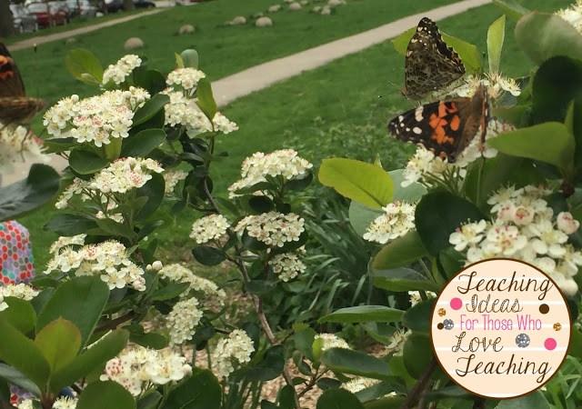 Butterflies being released in a garden