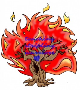 burning bush wm