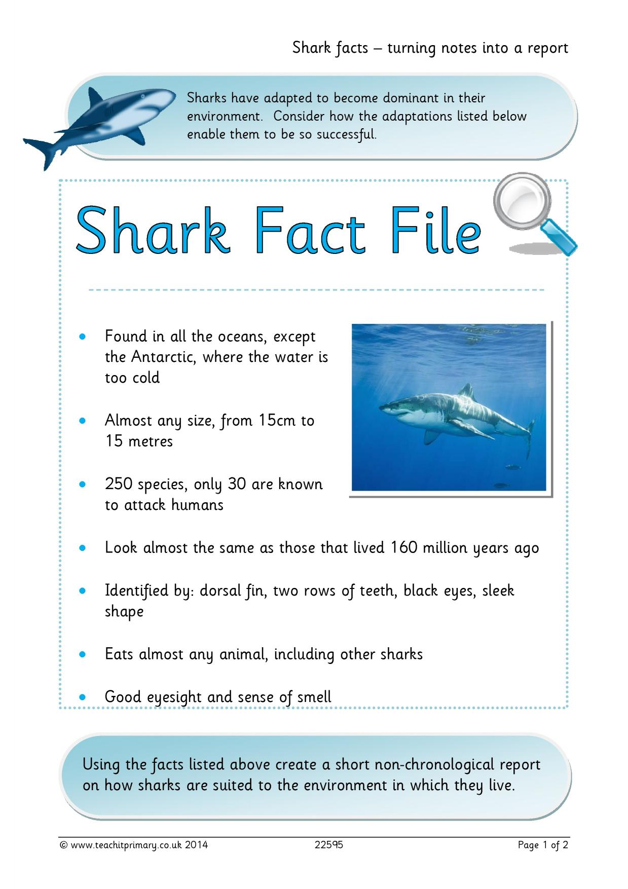 Shark Facts Turning Notes Into A Report