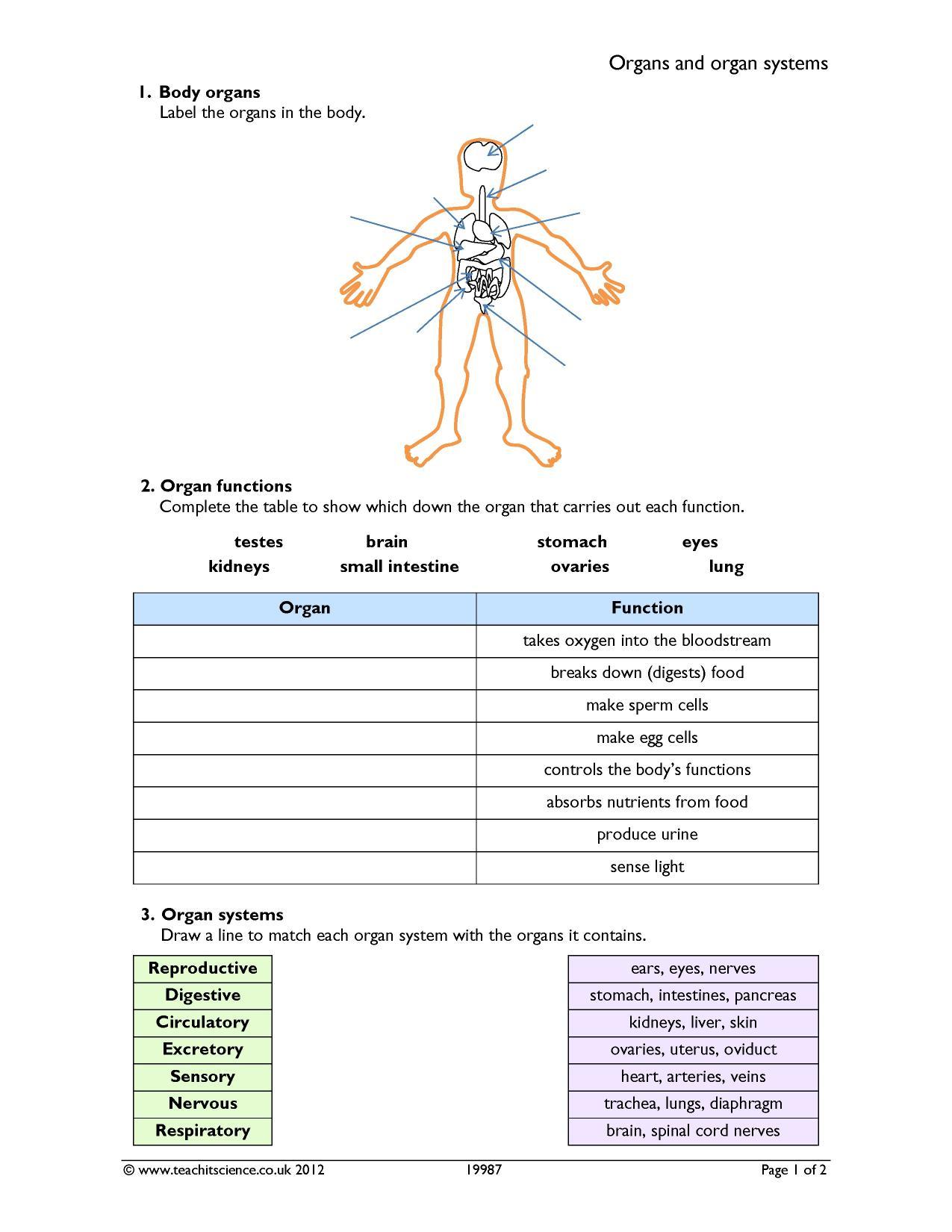 30 Label The Body Organs