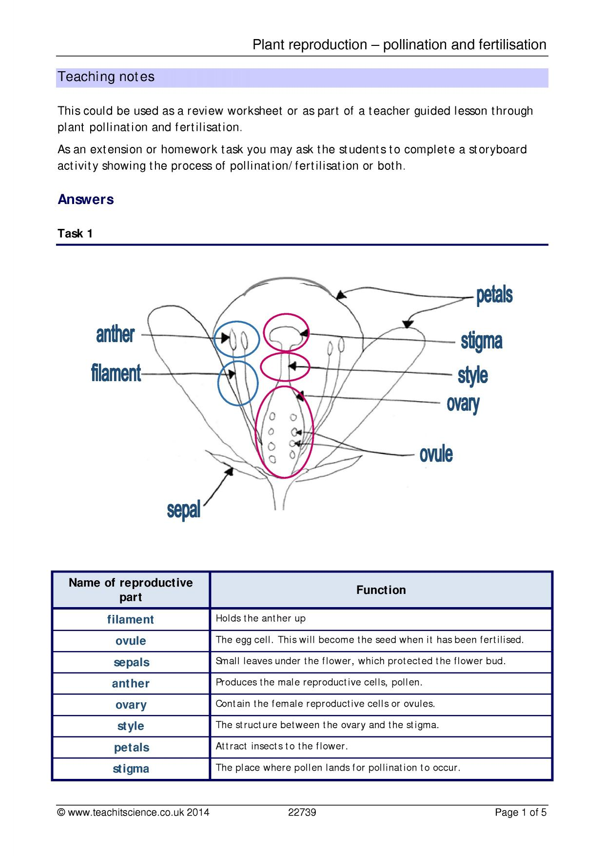 Biology Genetics Worksheet