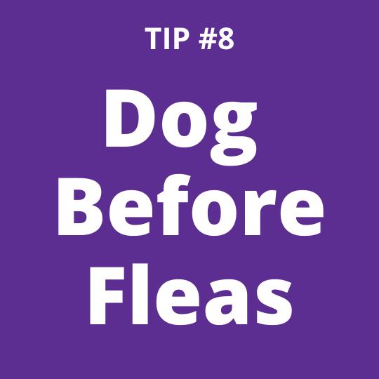 TIP #8 Dog Before Fleas