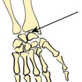 Image result for human joints gliding