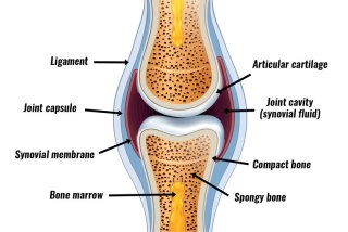 3. In Anatomy Revision,, Give   detail about  synovial joint and its type?