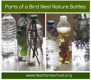 Parts of a bird nest in a nature bottle