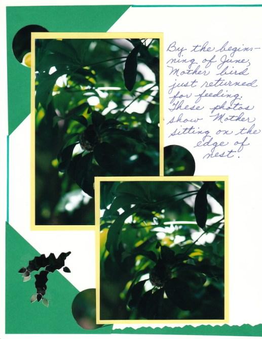 2000 Hummingbird_0008