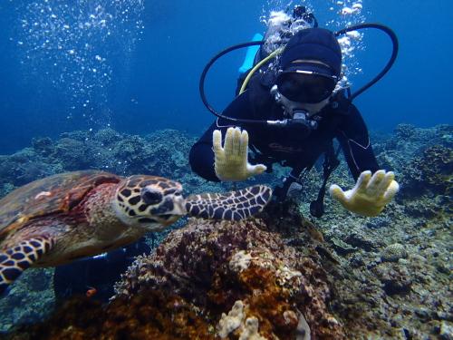 慶良間諸島カメ保証体験ダイビング
