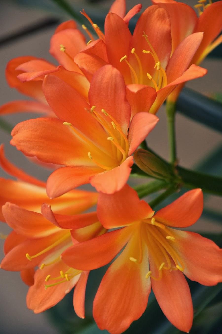 World Most Beautiful Flowers Wallpapers Hd Wallpapers Most Beautiful Flowers Wallpapers Hd 900x1355 Wallpaper Teahub Io