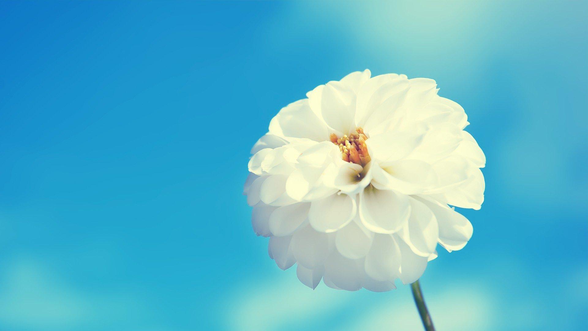 Beautiful Flower Hd Images High Resolution Flowers Hd 1920x1080 Wallpaper Teahub Io