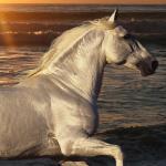 Running Beautiful Wild Horses Horse 828x1792 Wallpaper Teahub Io