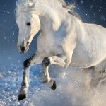 White Horse Run Mammal Portrait Wallpaper Iphone 7 Horse Wallpaper Iphone 1280x2120 Wallpaper Teahub Io