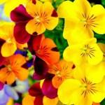 Iphone Wallpaper Hd Cute Flower 1080x1920 Wallpaper Teahub Io
