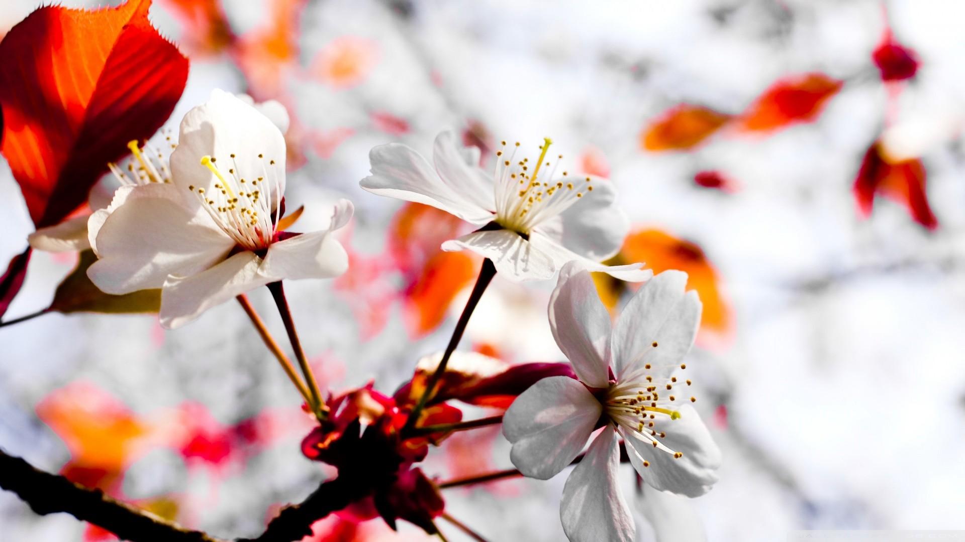 April Spring Flowers Desktop Wallpaper Data Src Full Screen Hd Wallpaper 4k 1920x1080 Wallpaper Teahub Io