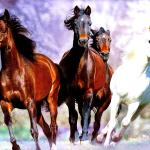 Horses Running Hq Definition Wallpapers For Free Red Running Horses Hd 3500x2404 Wallpaper Teahub Io
