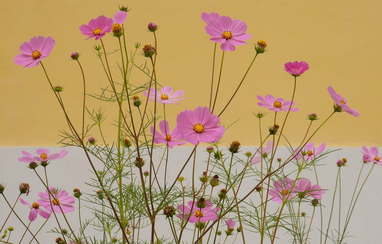 Photo Wallpaper Flower Summer Grass Flowers Nature Folwer Full Screen 1332x850 Wallpaper Teahub Io