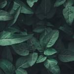 Wallpaper Leaves Green Plant Aesthetic Nature Background Green 1366x768 Wallpaper Teahub Io