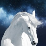 White Horse Stock Samsung Galaxy S5 Wallpaper Hd 1080x1920 Wallpaper Teahub Io