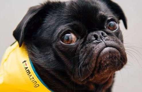 Hund ist grantig, weil er keinen Bock auf Teambuilding hat