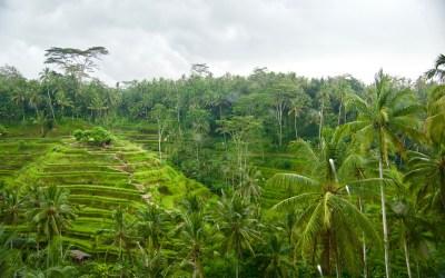 Bali | Nos Découvertes en Famille