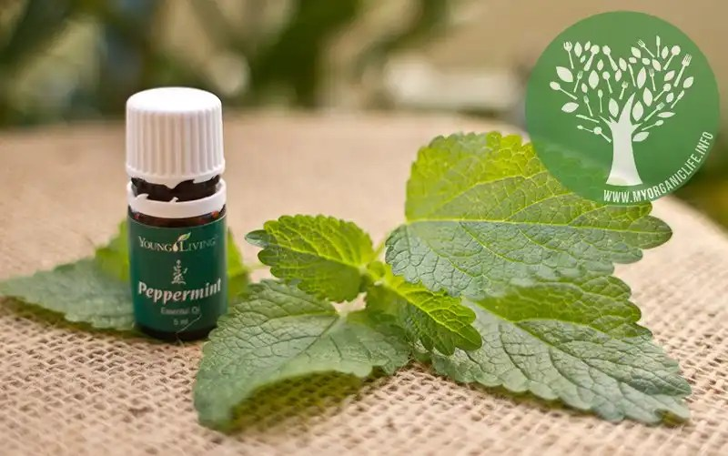 Got ants? Then you need Peppermint Oil…