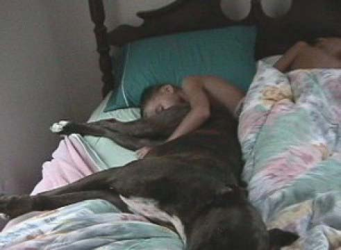 boy sleeping with dog butt in his face