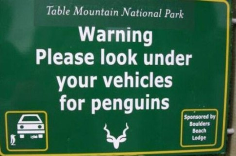 penguins under your car, bad art, funny store signs, fun advertisements, ads, worst ever, bad, street signs, real estate, misspelled, wrong, fail, stupid, wtf, bad product names, funny names, funny people, wrong place wrong time,