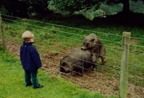 kid watching pigs hump mating pigs worst family photos, bad family photos, funny pictures, bad family pictures, awkward family photos, stupid people, horrible fail