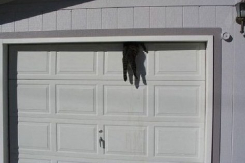 cat caught in garage door funny pictures stupid people weird pictures, random weirdness random funny funny people bad family photos awkward family photos funny street signs funny product names lost in translation