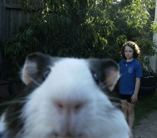 Cute Guinea Pig photobomb Funny Pictures Random Humor Epic Fails worst family photos bad family photos weird worst tattoos bad tattoos stupid people crazy people funny names funny memes animal memes awkward family photos
