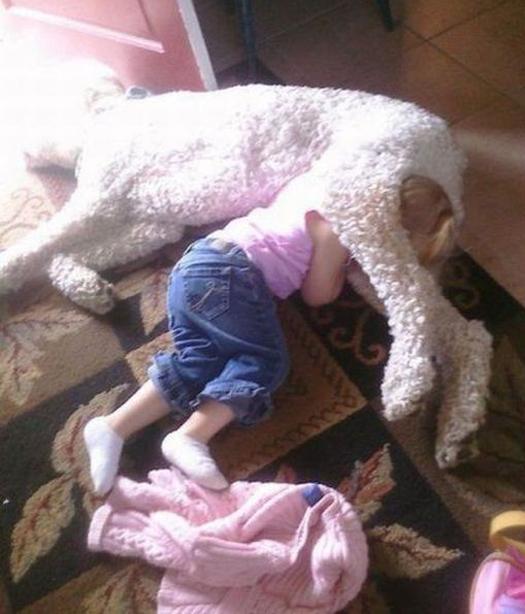 Girl sleeping head between dogs legs - Funny Awkward Family Photos. Strange & Crazy