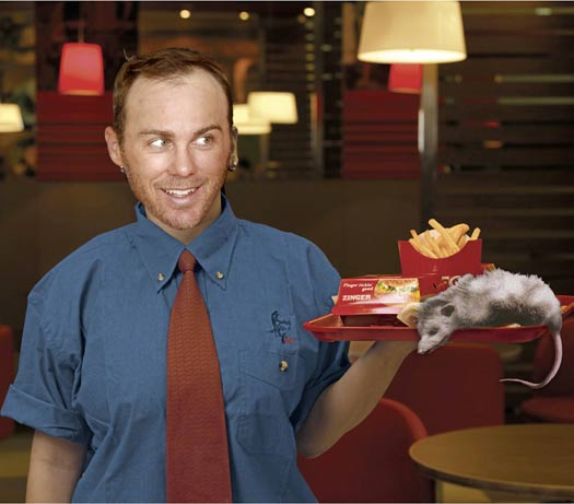 Funny Pictures of Kevin Harvick Waiter – Kobalt Tools 400 Las Vegas NASCAR Pictures Driver Photos