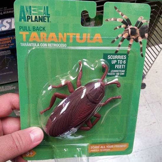 Tarantula ~ 27 You Had One Job Fails