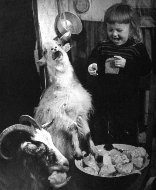 Vintage Creepy Old Photos girl goat