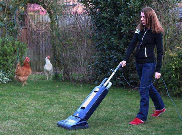 Funny Awkward Family Photos: woman vaccuuming back yard, chickens
