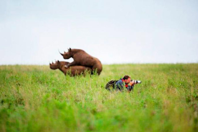 Funny Pictures: wildlife photographer taking picture with humping rhinos behind him